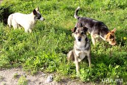 Набережная реки Тобол Курган, бродячие собаки
