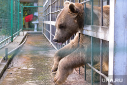 Медведь. Челябинск., зоопарк, грустный медведь