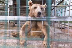 Медведь. Челябинск., зоопарк, медведь поет