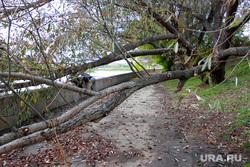 Набережная реки Тобол Курган, набережная тобола, упавшее дерево