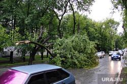 Упавшее дерево на Бажова. Екатеринбург, проезжая часть, сломанное дерево, упавшее дерево