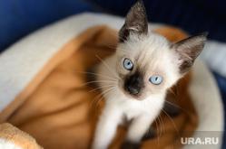 Клипарт depositphotos.com, кошка, домашнее животное, котик