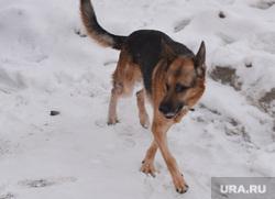 Уборка снега во дворах. Челябинск., собака
