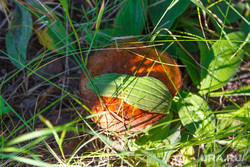 Путевые фото. Нижний Тагил -Восточный - Верхотурье - Гари, грибы