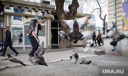 Новый сотрудник музея истории Екатеринбурга человек-антиголубь, голуби, городские птицы