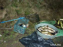 Браконьер с поличным Челябинск, браконьер, щука, рыба, электроудочка
