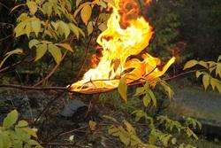 Открытая лицензия от 12.05.2017, огонь пламя, лесные пожары