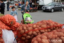 Овощная ярмарка Курган, картофель, овощная ярмарка