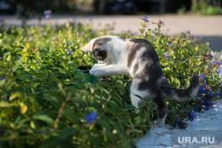 Крым., котенок