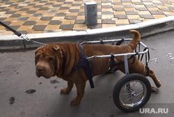 Коляска для собаки инвалида