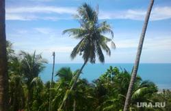 Клипарт, море, тропики, пальмы, океан