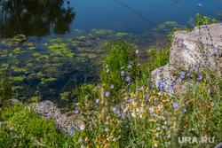 Разное. Курган, полевые цветы, берег реки