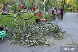 Сломанное дерево в детском парке Курган, сломанное дерево