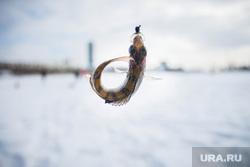 Алекс Клэр рыбачит посреди Екатеринбурга, рыба, зимняя рыбалка, окунь