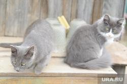 Клипарт. Челябинск, кошки, кот, домашние животные