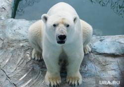 Животные в екатеринбургском зоопарке во время жары. Екатеринбург, белый медведь, умка