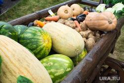 Новый Уренгой — Сеяха — Яр-Сале - командировка Кобылкина, овощи, тыква, фрукты, арбуз, дыня