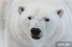 Челябинский зоопарк. Разная скотина.Челябинск., арктика