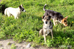 Набережная реки ТоболКурган, бродячие собаки
