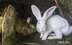 Китайские теплицы и др. Екатеринбург, белый кролик