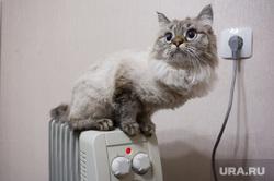 Кошка на батарее. Екатеринбург, холод, зима, тепло, домашние питомцы, осень, кошка на батарее
