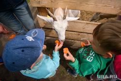 Ресторан Donna Olivia. Екатеринбург, коза, контактный зоопарк, дети, домашнее животное, козел