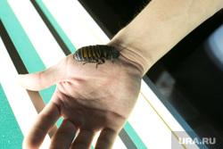 «Запрещенная вечеринка» издательского дома «Банзай» г. Екатеринбург, мадагаскарский таракан, тараканьи бега