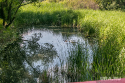 ЦПКиО города Кургана, камыш, речка битевка, цпкио, центральный парк культуры и отдыха кургана