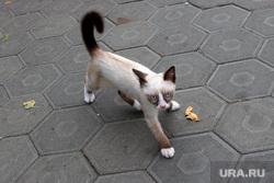 Фото - разное Курган, котенок