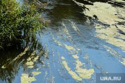 Река Миасс в центре города. Челябинск, вода, река миасс, водоросли, цветение воды, лето
