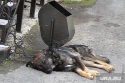 Билборды к выборамКурган, бездомные животные, собака