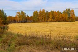 Сафакулево, деревня Мартыновка Сафакулевский район Курганская обл, поле, осень
