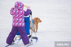 Ездовые собаки. Ханты-Мансийск, сани, упряжка, ездовые собаки