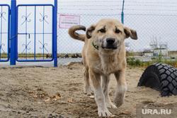 Поселок Тазовский, Новый Уренгой, Ямало-Ненецкий автономный округ, проход запрещен, закрытая территория, щенок, сторожевой пес, осторожно злая собака, охраняемая зона