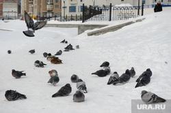 Колония уток у бассейна Динамо. Екатеринбург, голуби, утки, городские птицы