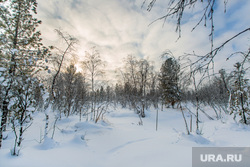 Жизнь оленеводов. Сургут, лес, тундра, зимний пейзаж