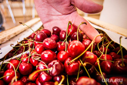 Клубника и вишня. Екатеринбург, фрукты, вишня, черешня