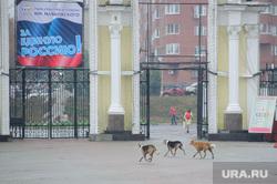 Встреча с матерью Басаргина. Екатеринбург, собаки, парк маяковского, бездомные животные, бродячие собаки, стая собак