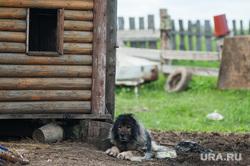 Многодетная семья фермеров из Нижнего Тагила. Свердловская область, деревня Черемшанка, деревня, пес, собака, село, дворовая собака