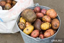 Стихийный рынок. Нижневартовск., картошка, картофель, ведро