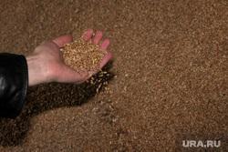 Алексей Кокорин в полях Курганская область, рука, пшеница, зерно