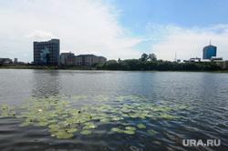 Места под объекты ШОС и БРИКС. Челябинск, река миасс, кувшинки