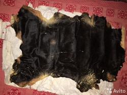 1338fc3d7 В Перми через Avito продают шкуры собак: колли, сеттеров, фото
