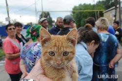 Поселок Нагорный Деревенская ОПГ Челябинск, котенок