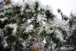 Клипарт.  Погода. Циклон. Стихия. Челябинск., зима, лед, сосна