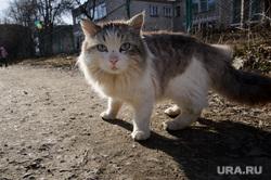 Клипарт, разное. Екатеринбург, бродячие животные, уличный кот