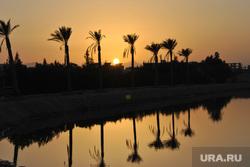 Клипарт, закат, море, пальма, египет