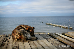 Улицы и окрестности Калининграда весной. Калининград, берег, пес, собака, отдых, светлогорск, балтийское море