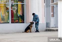 Взрывное устройство Курган остановка у Куйбышева 75 22.11.2013г, полицейский с собакой, кинолог