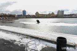 Обзор гостевого маршрута к приезду Путина. Челябинск, полет, ворона, птица, набережная реки миасс